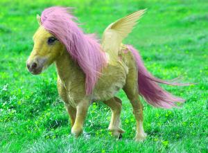 wish pony