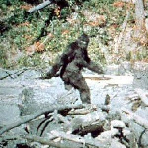 Bigfoot-Sighting