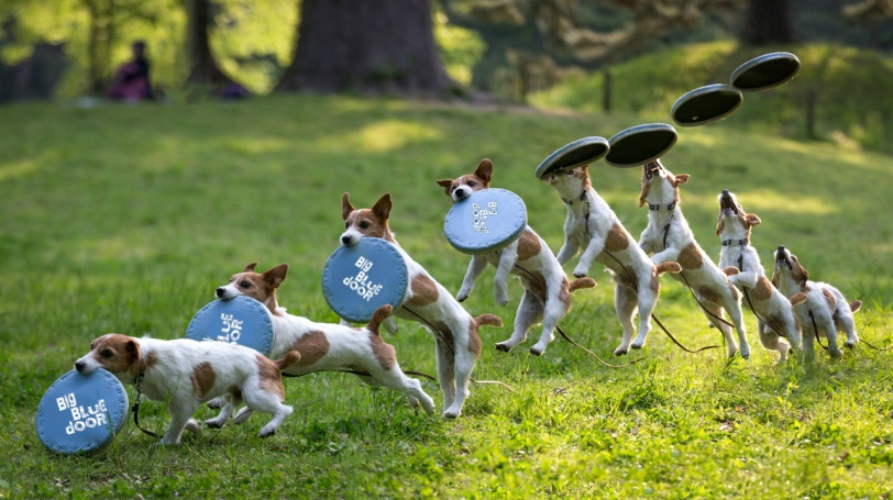 dog w frisbee