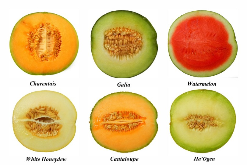 types-of-melon